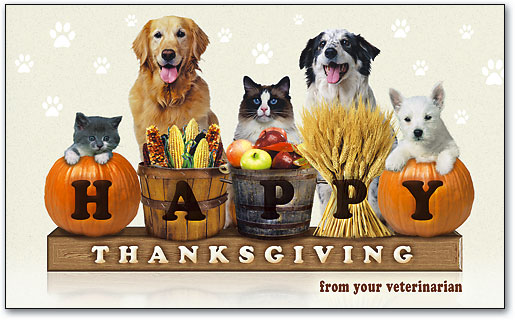 Thanksgiving Tips For Pets