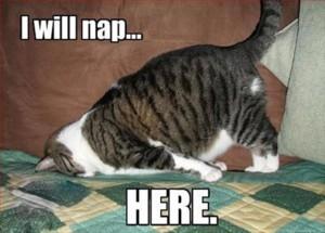 funny-cat-nap3