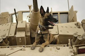 330px-Belgian_Shepherd_Malinois_on_top_of_tank