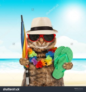 stock-photo-funny-cat-going-on-vacation-296302682