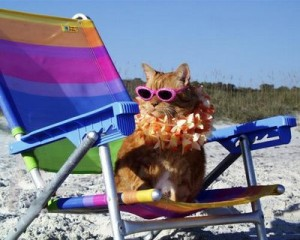 vacation-cat