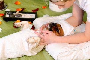 dog-getting-massage_hctduv