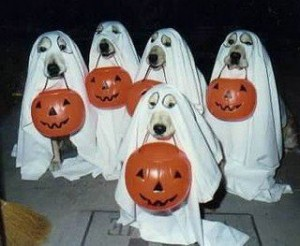 halloween-dogs-as-ghosts