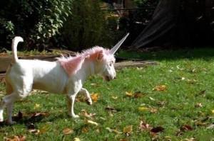 unicorn bull terrier