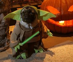 While a pug seems the most appropriate breed for this costume any pooch would look adorable with those big green ears! & 10 Best Pet Costumes | Veterinarians in Leesburg | Market Street ...