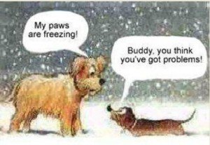 dog-snow-11211