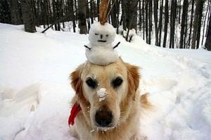 snowman-dog