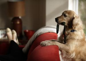 dog-wants-to-go-for-a-walk-thinkstock-sb10069719ai-001