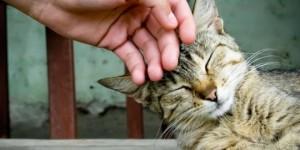 petting-my-cat
