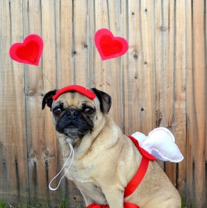 Cupid Dog